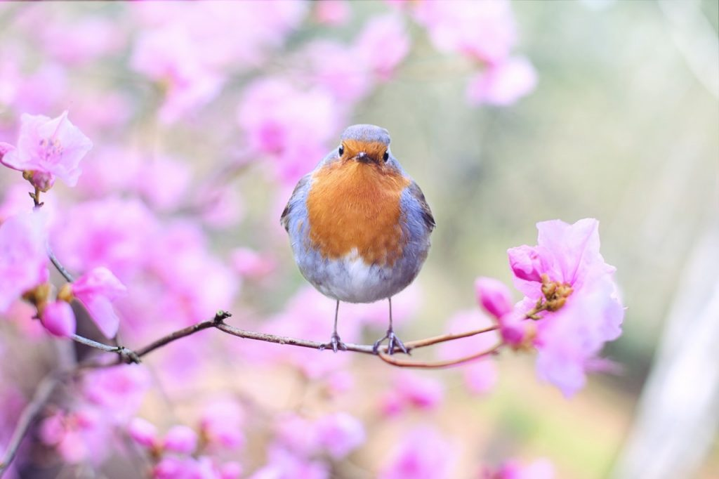 spring tree blossoms and bird perched on a branch